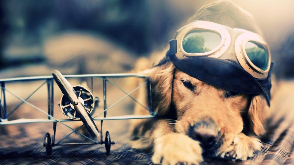 pilot-dog-plane-1920x1080-wallpaper362080